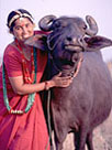 buffalo_pict1.jpg