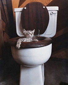 kitten-in-toilet.jpg