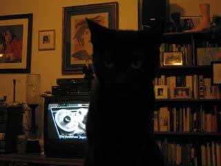 oscar_cat.jpg